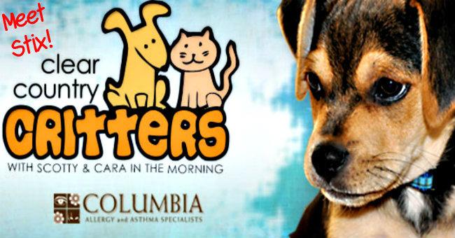 critters-Clear99-stix