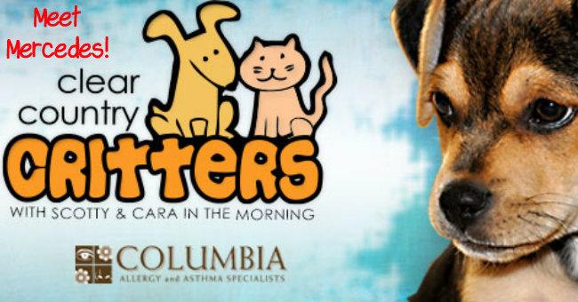 critters-mercedes