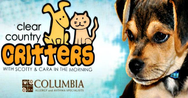 critter-jaime