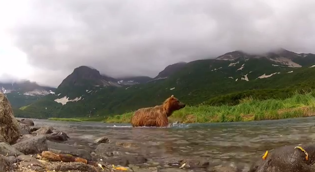 Grizzly Go Pro-032414