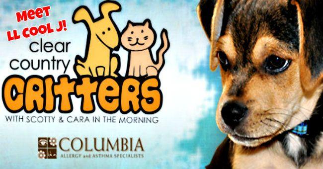 critters-ll.jpg