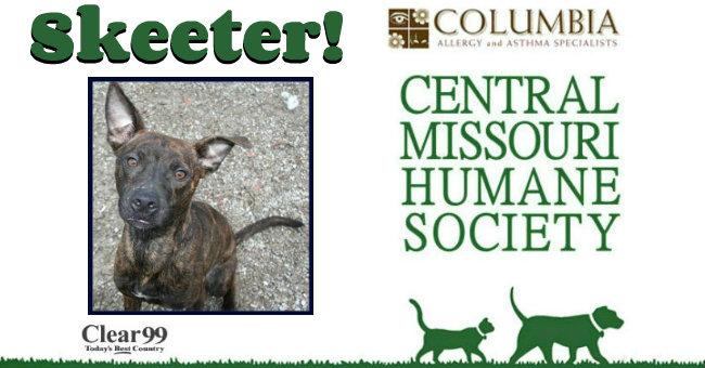 Critter-Skeeter