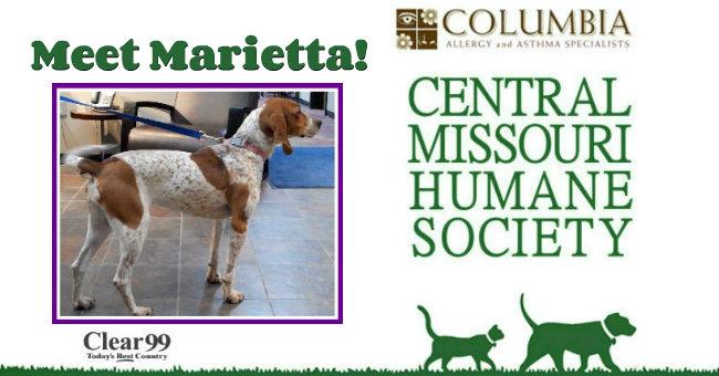 Critter-Slide-Marietta