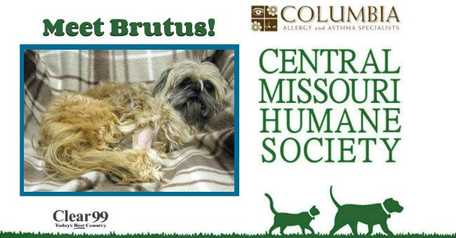 Critter-Brutus