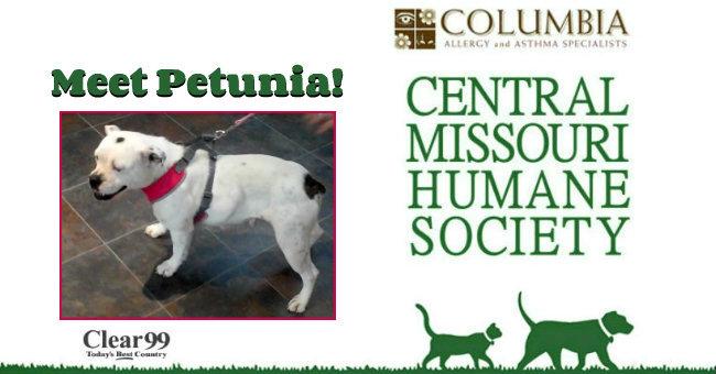 Petunia-Slide
