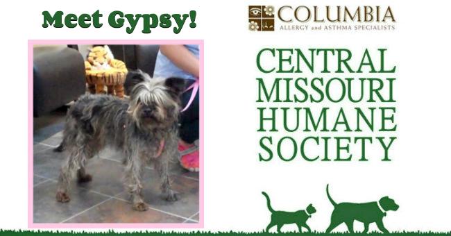 Gypsy-Slide