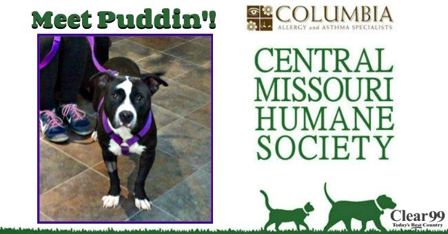 Puddin-Slider