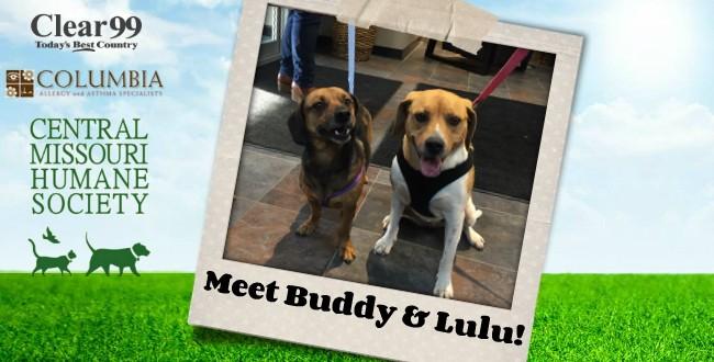 Buddy-Lulu_Slider-16