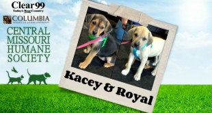 Kacey_Royal_Slider-16