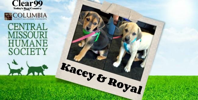 Kacey_Royal_Slider-16