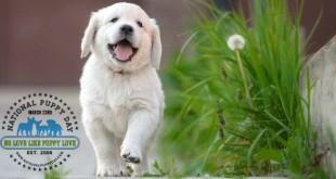 puppy-day-16