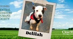 delilah_slider