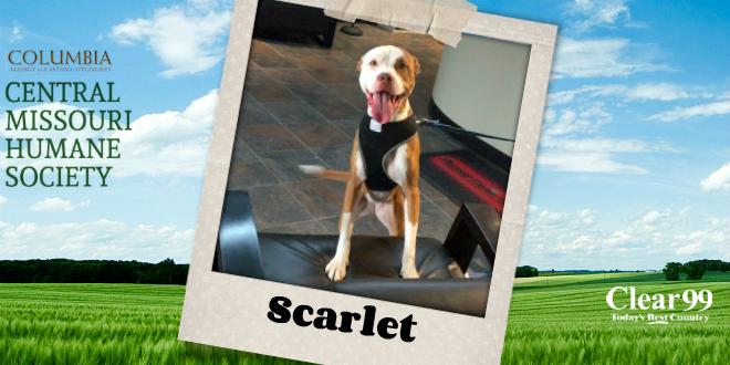 scarlet16_slider