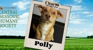polly_slider