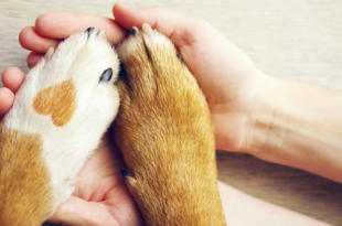 dog paws held by human hands