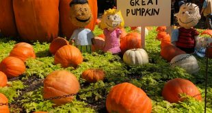 Charlie browns great pumpkin patch