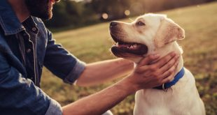 man and yellow Lab